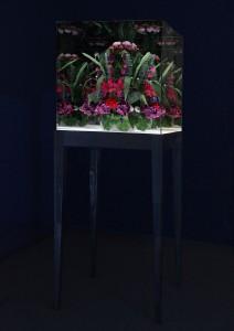 Doku ALICE Blumen Hauptbild